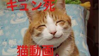 【キュン死】インスタグラムで話題の猫動画が可愛すぎた