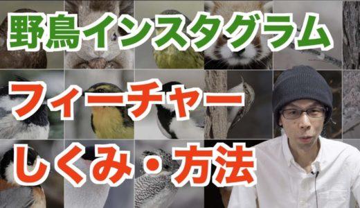 【野鳥インスタグラム】フィーチャーされる仕組みと方法