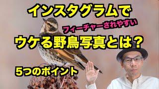 【野鳥撮影】インスタグラムで好まれる野鳥写真とは?5つのポイント【フィーチャー・イイネされやすい】
